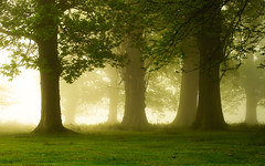 there's magic in the air (andrew evans.) Tags: lighting wood morning trees light england mist nature misty fog fairytale sunrise landscape countryside kent spring woods nikon calm ethereal wonderland storybook magical 70200 f28 enchanted d3