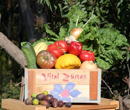 4647484421 96973f0170 Vital ZumanOrganic Farm: A Locavores paradise in Malibu