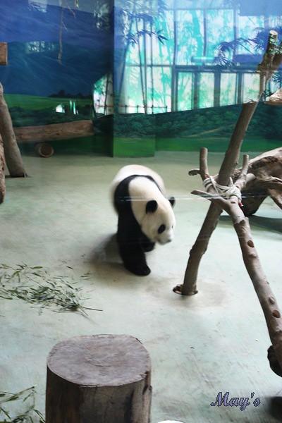 990522台北動物園 009