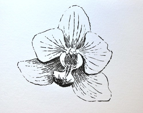 Orquidea drawn with Pentel Brush Pen
