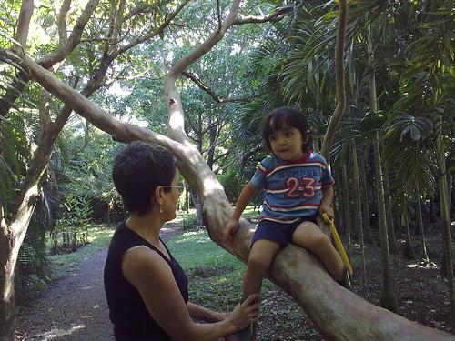 En el árbol
