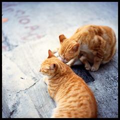 一刻心跳 (Lefty Jor) Tags: street hk love 120 6x6 film cat t hongkong kiss day dof kodak ground hasselblad planar 500cm carlzeiss proxar 80mmf28 ektacolorpro160