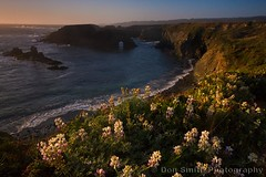 Mendocino Headlands and Arch (Don Smith Photography) Tags: peaceful serenity beautyinnature