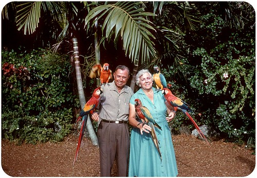 Parrot Jungle, Miami — 1956
