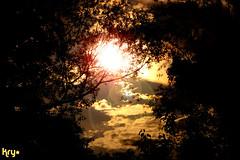 Have you find it? (LaKry*) Tags: wood sky sun black tree nature sunshine yellow alberi clouds nuvole branches natura giallo cielo sole nero rami vicenza cerchio bosco cirlces parcodicasale
