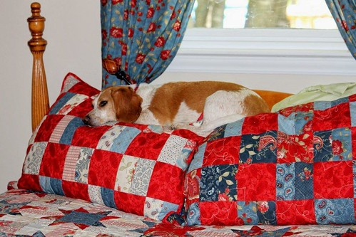 Annie_on_pillows