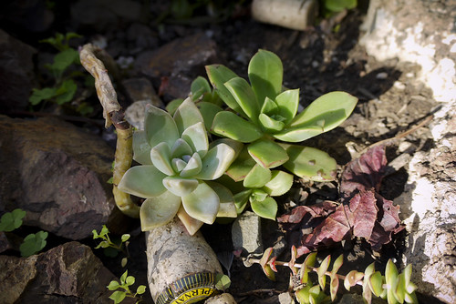 succulents in the late afternoon