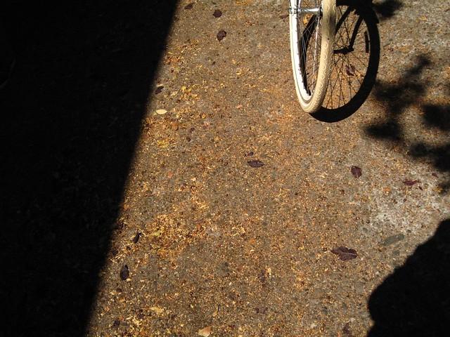 wheel shady