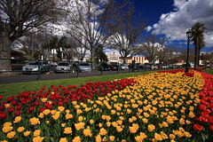 Bendigo Conservatory Gardens (kth517) Tags: spring tulips australia victoria 澳洲 鬱金香 春天 bendigo 維多利亞州 bendigoconservatorygardens
