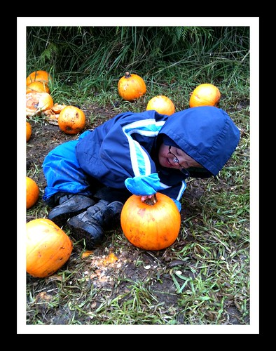 Aidan picks his pumpkin
