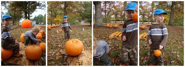 Pumpkin collage 2009_2