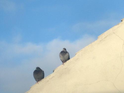 november pigeons