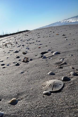 Sand Dollar - Stump Pass Beach State Park, Fla., Nov. 6, 2010