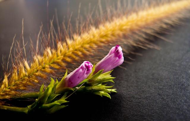 IMG_1261 Atistic Flower