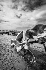 The Beast (gaetan4468) Tags: monstre marin echoué saint nazaire mer bretagne bzh