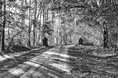 Witsell Rd - Brick Pillars (Sco†† C. Hansen (TheHansenGallery.com)) Tags: brick country dirt pillars road sunlight trees witsell blackandwhite