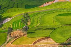 _Y2U0428.0617.TL155.Dền Sáng.Bát Xát.Lào Cai. (hoanglongphoto) Tags: asia asian vietnam northvietnam northwestvietnam landscape scenery vietnamlandscape vietnamscenery vietnamscene terraces terracedfields terracedfieldsatvietnam transplantingseason sowingseeds hillside valley hdr canon canoneos1dx canonef500mmf4lisiiusmlens tâybắc làocai bátxát dềnsáng tl155 phongcảnh ruộngbậcthang ruộngbậcthangbátxát mùacấy đổnước bátxátmùacấy sườnđồi thunglũng sunlight afternoon sunny sunnyafternoon nắng nắngchiều