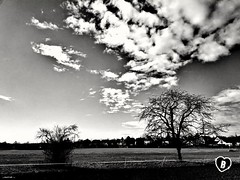 FEBRUARY WALK CLOSE TO TOWN #february #clouds #trees #district #Schweinfurt #Landschaft #landscape #blackandwhite #schwarzweiß #Photographie #photography (benicturesblackwhite) Tags: blackandwhite landscape landschaft february district photography clouds schwarzweis schweinfurt photographie trees