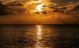 Sunset Backligth