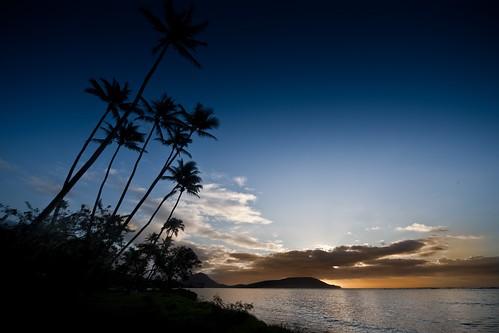 Hawaii Palms Ocean