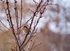 (tad2106 - Trudie Davidson Photography) Tags: winter snow festive robinredbreast gardenbirds britishbirds robim christmasimage