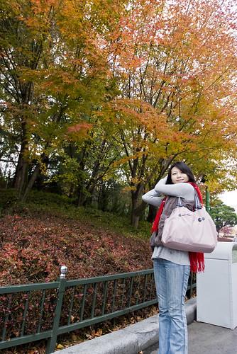 愛寶樂園 楓葉 韓國之旅
