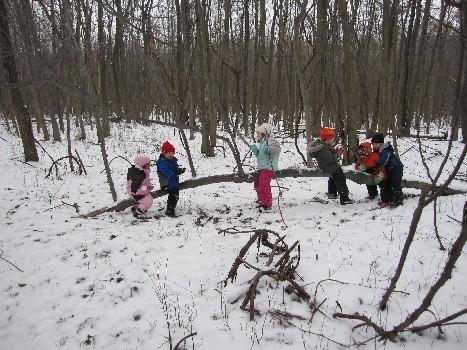Kids on a Tree