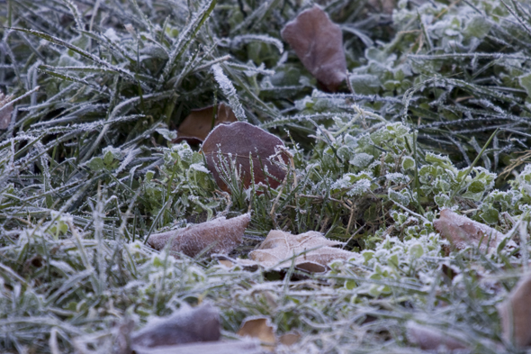 121909_frost6