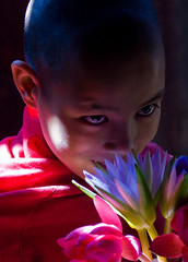 0087 Portrait of a novice monk--Myanmar (ngchongkin) Tags: portrait niceshot monk harmony myanmar soe shiningstar supreme nationalgeographic musictomyeyes emmyawards beautifulshot superphotographer itsnotaboutyou topseven abigfave royalgroup peaceaward colorphotoaward avpa flickrhearts flickraward flickrbronzeaward heartawards diamondstars dazzlingshots flickridol flickrestrellas thebestshot arealgem spiritofphotography 469photographer artofimages angelawards freedomhawkaward contactaward thekeyofyourmind magicunicornverybest sapphireawards totaltalent flickrsgottalent bestpeopleschoice zodiacawards mygearandmepremium poppyawards meandmygear fabulousplanetevo