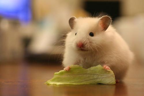 MJ: lettuce