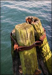 Kieler Förde (Prinz Wilbert) Tags: wood green water germany deutschland bay wasser iron europa europe waterfront rusty fjord grün holz kiel rostig schleswigholstein holstein firth brd eisen norddeutschland kielerförde northgermany förde frg firthofkiel