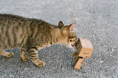 F i g h t ! (夢夢❤) Tags: film cat toy toys amazon taipei 陽明山 danbo 文化大學 contaxnx 四葉妹妹 danboard 紙箱人 阿楞 阿楞°△° 091223 contaxn5014