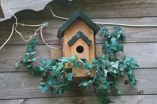 Blue Tit Nest Box