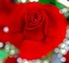 Many thanks for your prayers my friends, I love you very much (Jose Luis Mieza Photography) Tags: barcelona flowers paisajes flores flower love fleur thanks fleurs flor ramblas fflower benquerencia florews reinante jlmieza thesuperbmasterpiece saariysqualitypictures pyayer reinanteelpintordefuego joseluismieza