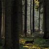 Meeting the Prince of the Royal woods (B℮n) Tags: park red de topf50 ede topf300 deer national bambi topf100 hoge 500faves roe topf200 easterbunny veluwe thumper enchantedforest tms deerhunter natuurmonumenten ree soest topf400 zandverstuiving sprookjesbos topf500 tellmeastory lariks atdawn staatsbosbeheer rustgebied brownhare avondschemering europeanhare fijnspar groveden 100faves 50faves naaldbomen ooginoog 200faves struikgewas greatatmosphere drakenstein topseven rareopportunity 300faves closedarea royalwoods wildehaas 400faves infinestyle douglasspar sognidreams forestscenics theprinceoftheforest middleoftheforest rustgebiedvoorwild opderandvanhetrustgebied heideenstuifzandgebied oudeboskernen kleinstebeweging verdwijnenzeweer zeldzameontmoeting thehareranouttoo bambenstamper roedelherten hemlockspar sitkaspar benthehunter greatprinceandthumber