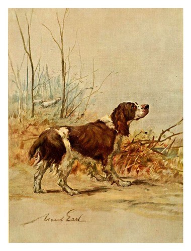 019-El Springer ingles-The power of the dog 1910- Maud Earl