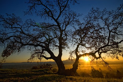 Dinosaur Hill Park II (Lee Sie) Tags: morning blue orange sun sunlight tree silhouette oak day branches clear bayarea walnutcreek mtdiablo pleasanthill contracosta giantoak