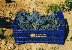 Small grape box (Marilena Barbera) Tags: harvest handpicking