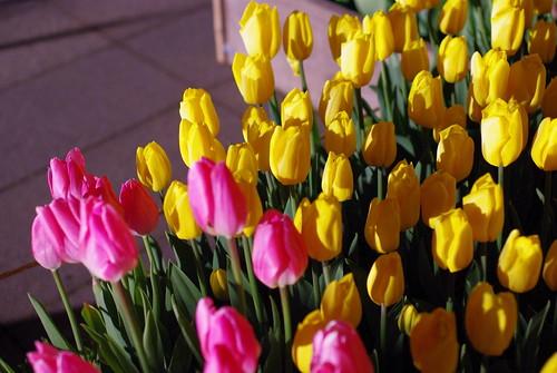 100116 新春☆春を先取りツアー15