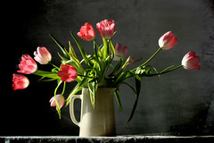 Basking (Gordana AM) Tags: life pink flowers white ontario canada black green texture leaves rose horizontal wall contrast dark table three still tulips cut many natura indoors tulip bunch getty windsor strong bouquet pitcher tabletop roze morta licensed growers colorderosa ruzicasto lepiafgeo