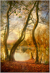 """  "" (Jean-Michel Priaux) Tags: autumn sunset sun sunlight lake france tree nature water fairytale forest photoshop automne painting dream n peinture dreaming alsace letter abc form alphabet paysage hdr forme lettre anotherworld tang savage sauvage fret ried priaux impressedbeauty sermersheim kogenheim"