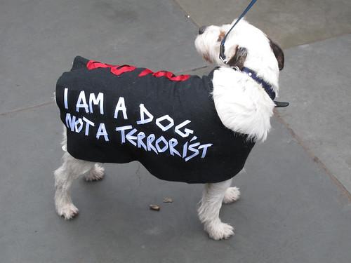 I'm A Photographer Not A Terrorist-13