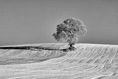 Drop Shadow (Andy_Goss) Tags: trees ireland winter irish carlow irishlandscapes vanagram gettyimagesirelandq1
