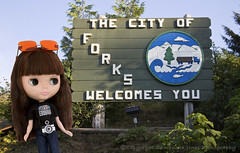 Welcome to Sunny Forks!