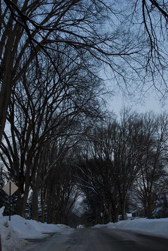 trees canopy