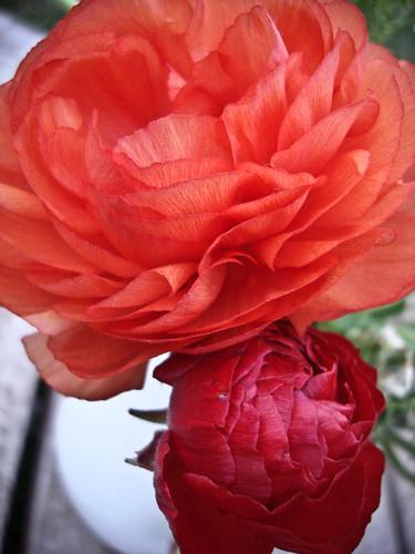 february :: bloom