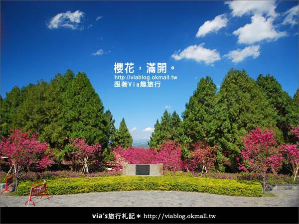 【九族櫻花季】櫻花滿開!最浪漫的九族文化村櫻花季19