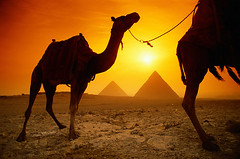 egypt (ayman_ay17) Tags: egypt cairo giza