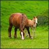Love (Pilar Azaña Talán ) Tags: españa caballos soe cantabria cabárceno mywinners abigfave parquenaturaleza natureselegantshots 100commentgroup pilarazaña