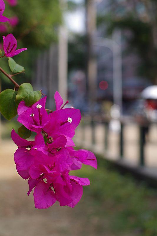 2010-02-04_台南公園花卉節搶先拍+雜圖